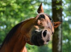 Śmieszny koń