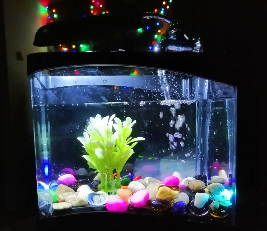 Akwarium na biurko