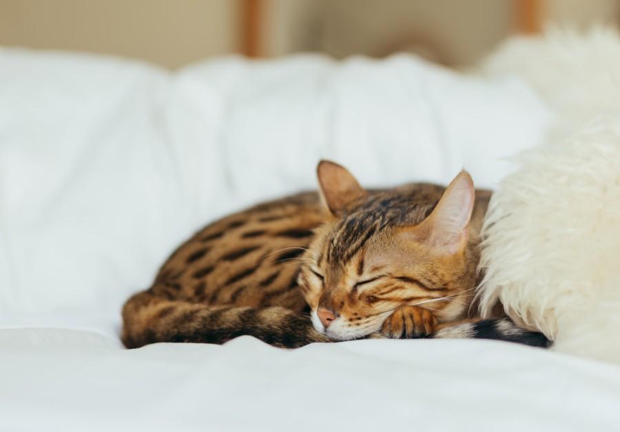 Śpiący kot - jakość snu